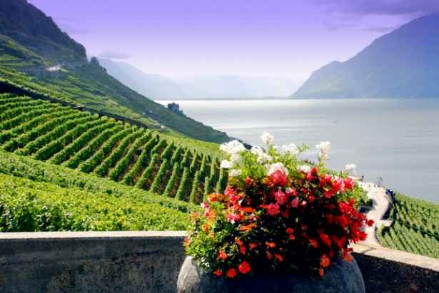 Explore Lake Geneva, Lavaux vineyards