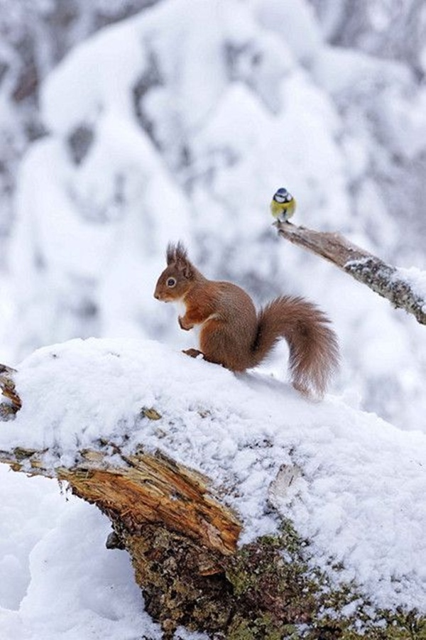 cute animals in the snow