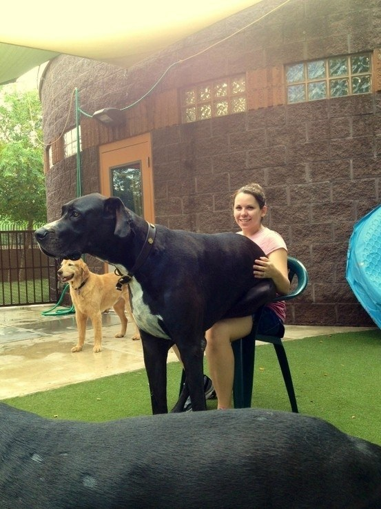 Cute animals,giant dogs with gentle hearts with gentle hearts