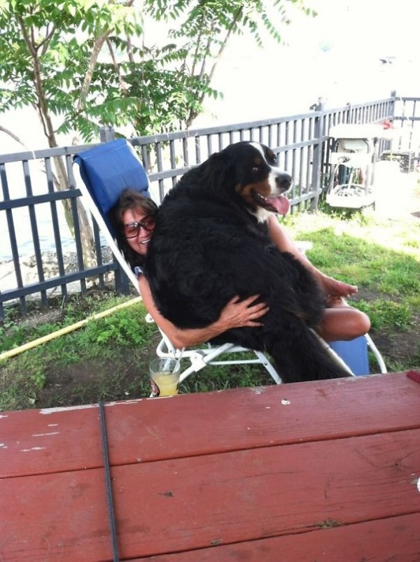 Big dogs with gentle hearts