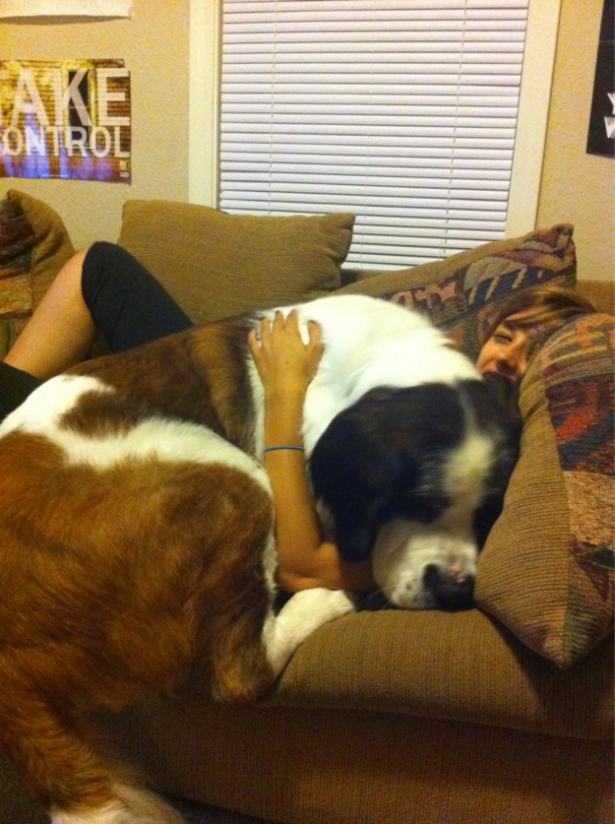 Cute animals, giant dogs with warm hearts