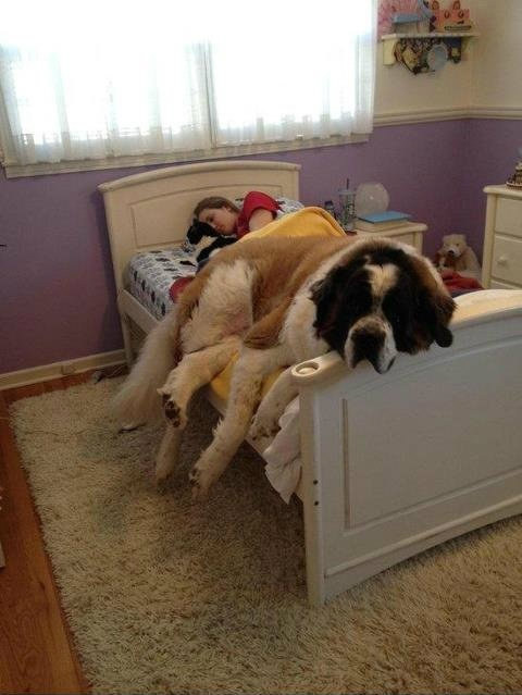 Cute animals, giant dogs with gentle hearts