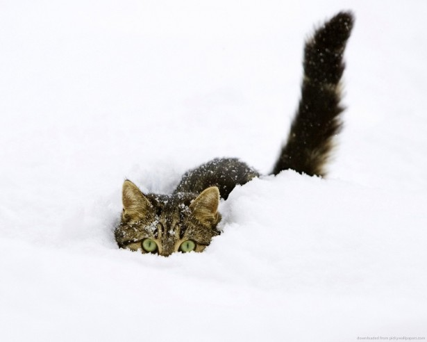 Cute cat playing in the snow