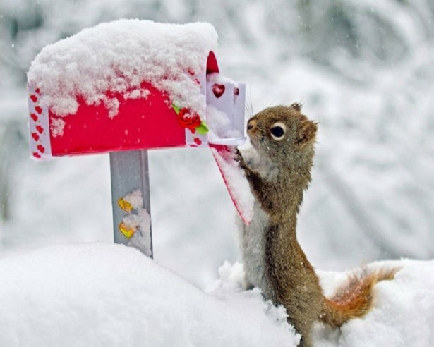 Cute squirrel in the snow