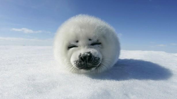 Cute animals, seal