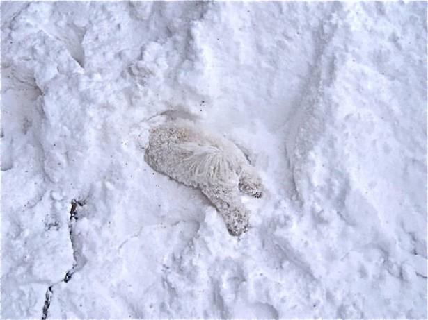 Cute polar bear in the snow