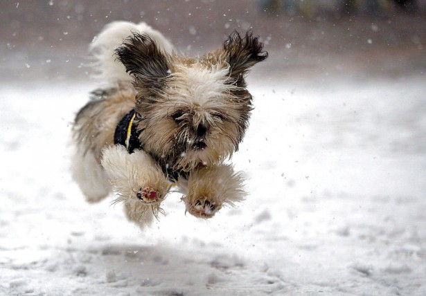 Adorable puppy in the snow