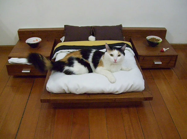 A spoiled cat in its mini bedroom