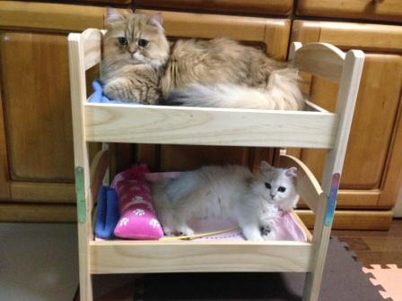 Bunk beds for cats