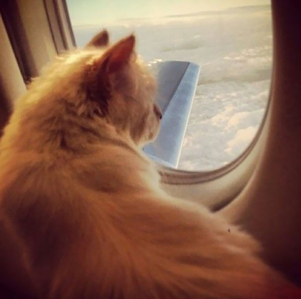 Cat and its private jet plane