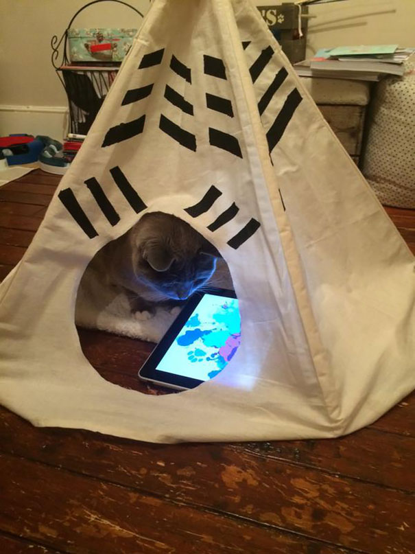 A cat with its iPad