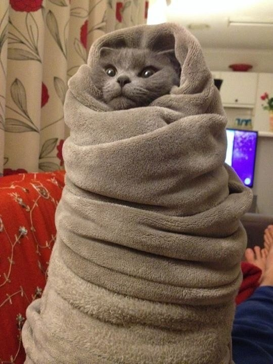 A spoiled cat having its own blanket
