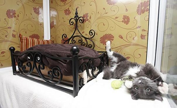 Cat luxury hotel