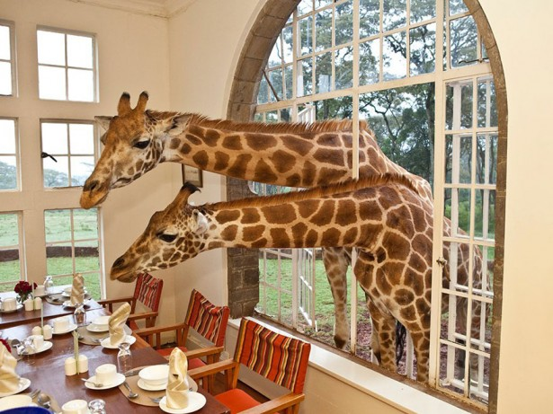 Unique hotels in Kenya, Giraffe Manor