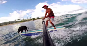 Kama the adorable surfing pig with his owner Kai.