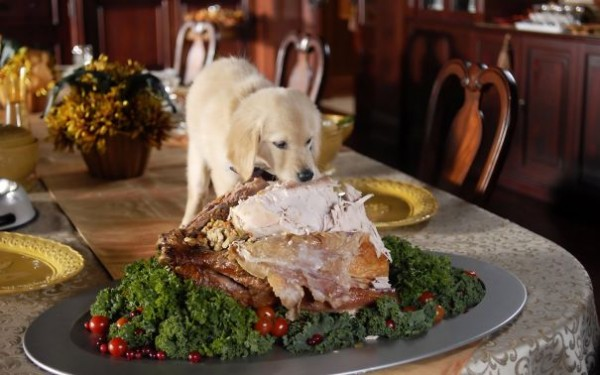 A dog eating the meat from the table