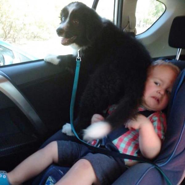 A bad dog sitting on a baby