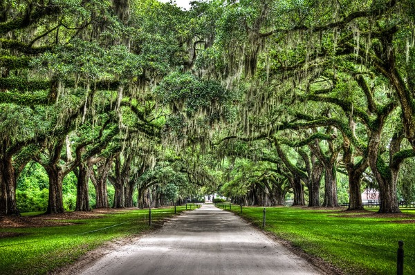 This picture presents Avenue of Oaks in Mount Pleasant, South Carolina