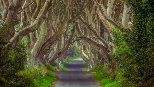 This picture presents The Dark Hedges in Northern Ireland