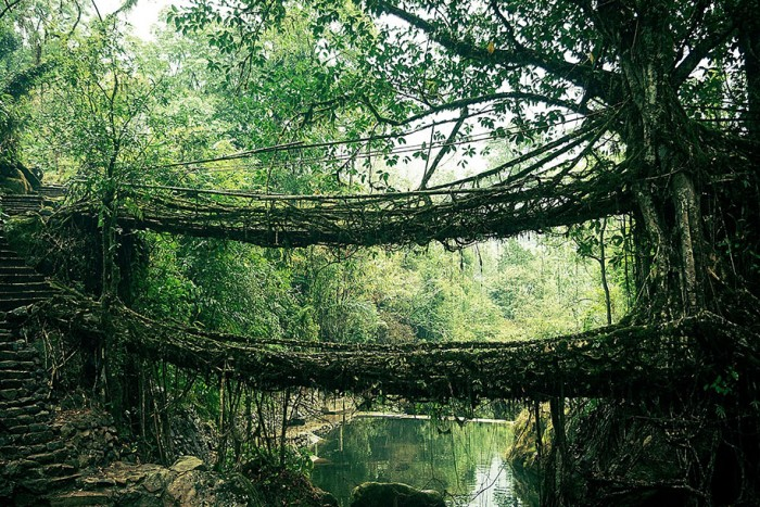 Root bridge in India is one of the World's most magical old bridges