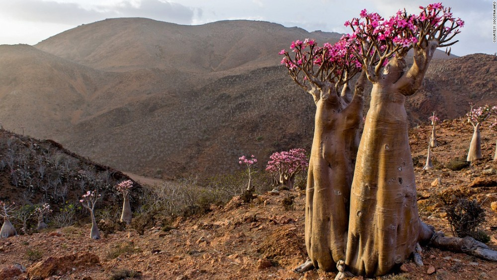 Most amazing world heritage sites, Socotra in Yemen