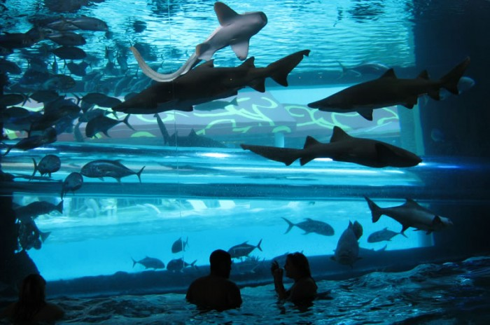 The Tank pool in Las Vegas is one of the most amazing swimming pools in the world.