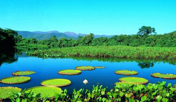 Pantanal, Moto grosso do Sul is one of the tourist attractions in Brazil you must visit.