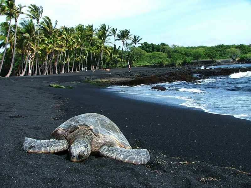 Unique and unusual beaches in the world. Punaluu Black Sand Beach in Hawaii