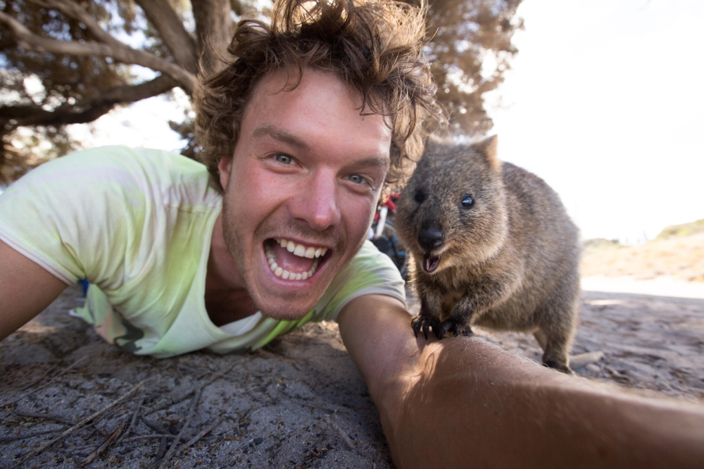 The 'Quokka Selfie'-Just Look At That Grin | Travels And ...