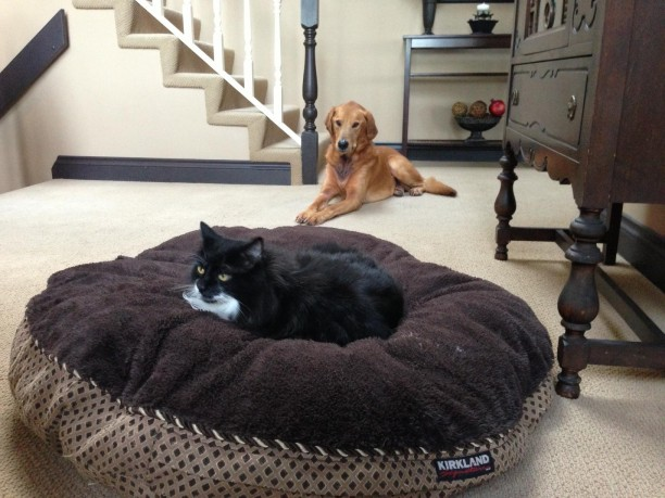 A compilation of photos of the cats stealing dog beds.