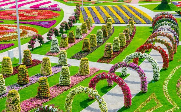 Flower fields in Dubai- Miracle garden