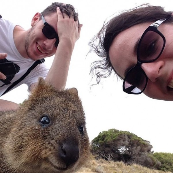 This quokka selfie is one of the funniest selfies with animals.