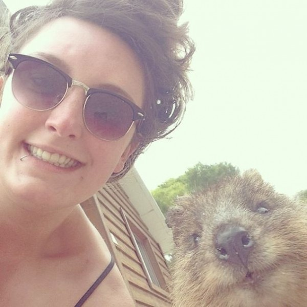 This is one of the funniest quokka selfies.
