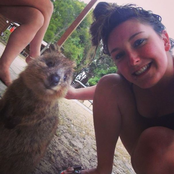 This smiling quokka will brighten your day.
