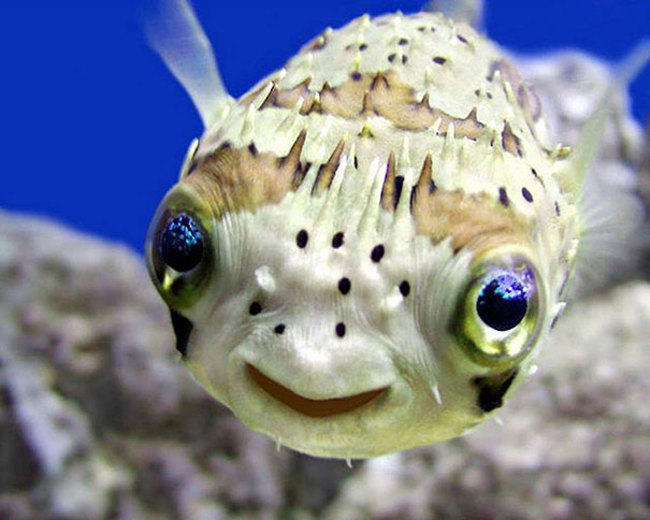 This smiling fish will brighten your day.
