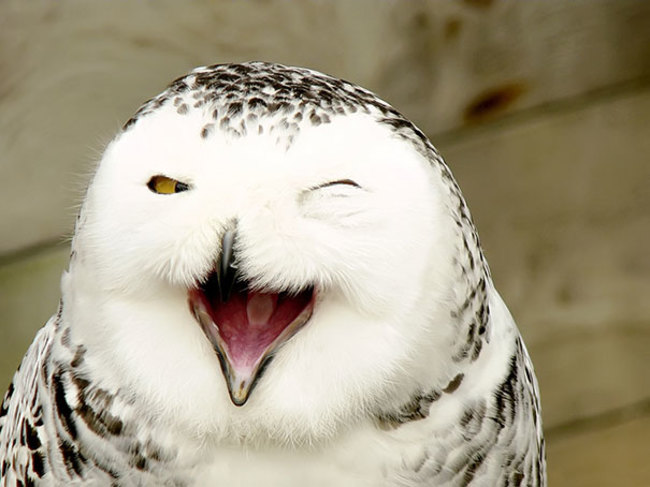 This smiling owl will brighten your day.