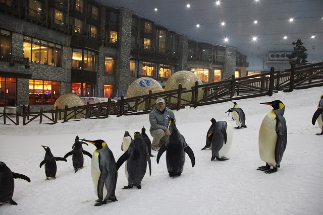 Ski Dubai resort is one of the most unusual sports venues in the world.