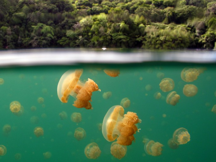 Incredible photos reveal what lies beneath the water's surface.
