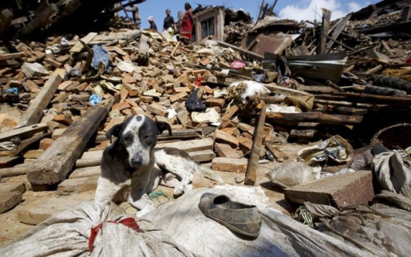 You can help animal victims of Nepal earthquake.