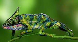 Full body painting create a perfect illusion of a colorful chameleon.