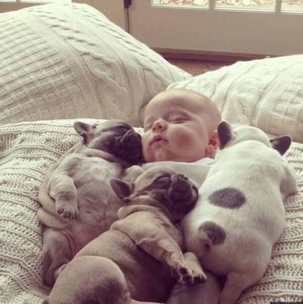 These are the sweetest bulldog puppies you have ever seen.