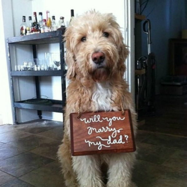 One of the most unique marriage proposal ideas is putting the ring around your dog's neck.