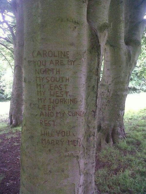 One of the most unique marriage proposal ideas is to carve your proposal message into a tree.