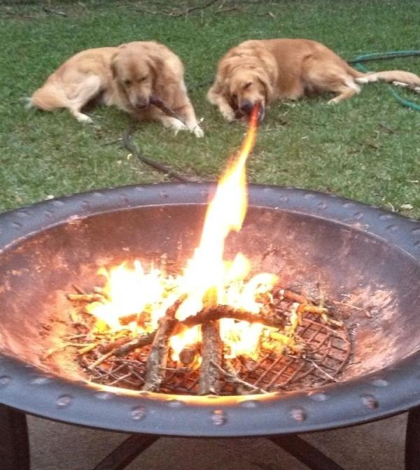 perfectly timed photos, dogs looking like puking fire