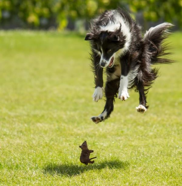 photos taken at just the right moment - a dog and a mouse have a fight