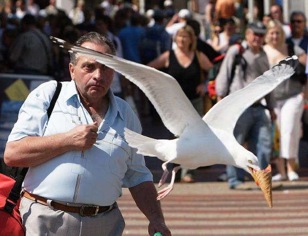 photos taken at just the right moment - a bird stealing a man's ice cream