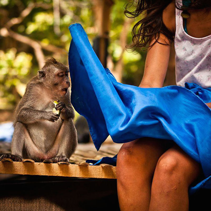 Perfectly timed photos, a monkey staring at a girl's legs