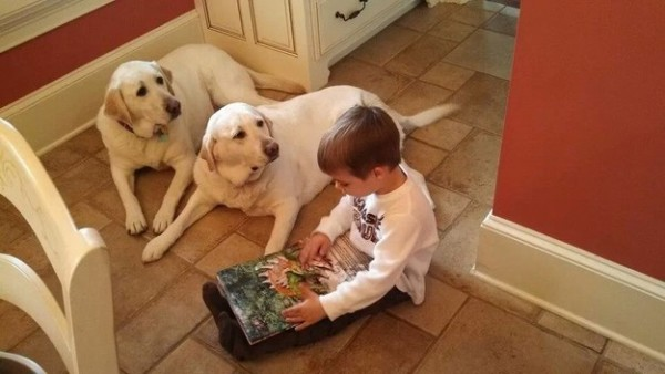 Reasons why to have a Lab in your home.