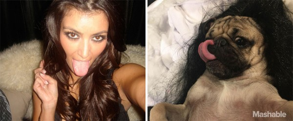 Doug the Pug as Kim Kardashian- hilarious!