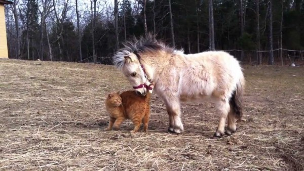 The cutest mini horses you have ever seen
